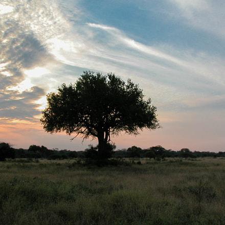 Sunset  in the savanna, Nikon E5700