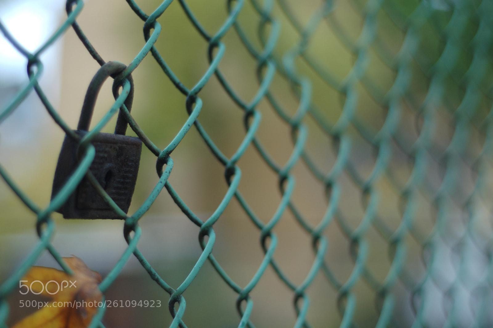 Nikon d50, Nikon D50, AF Nikkor 50mm f/1.8 N