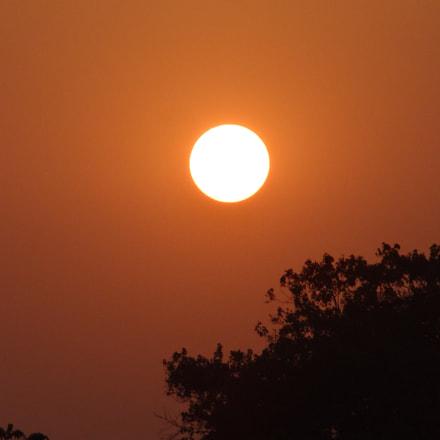 Sun behind the tree, Sony DSC-HX10V