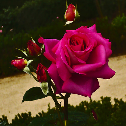 LA ROSE, Panasonic DMC-LS60