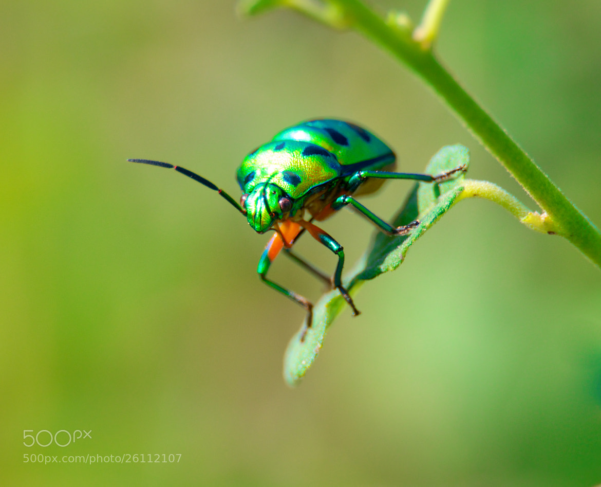 Photograph ColouR CounT by ViShWa  on 500px