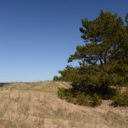 Especial pine tree on, Nikon D800, AF-S Nikkor 28mm f/1.8G