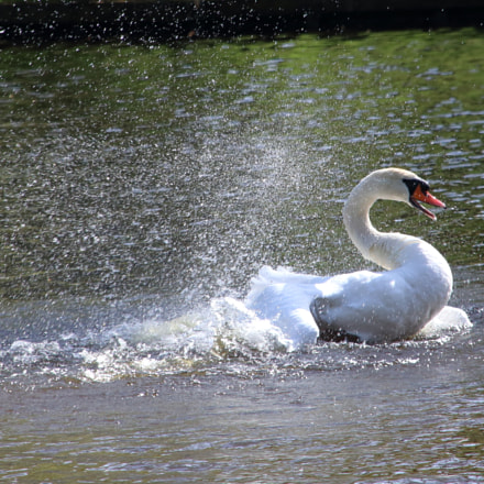 The Swan Bath, Canon EOS 80D