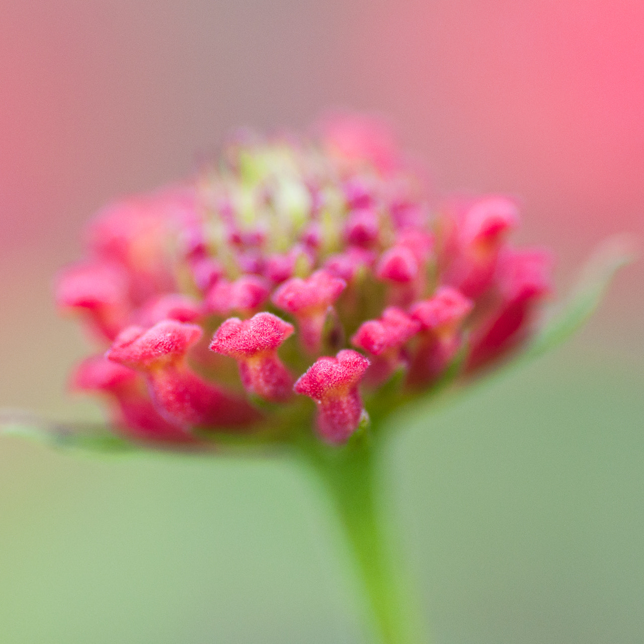 Photograph flower by LiangJin Lim on 500px