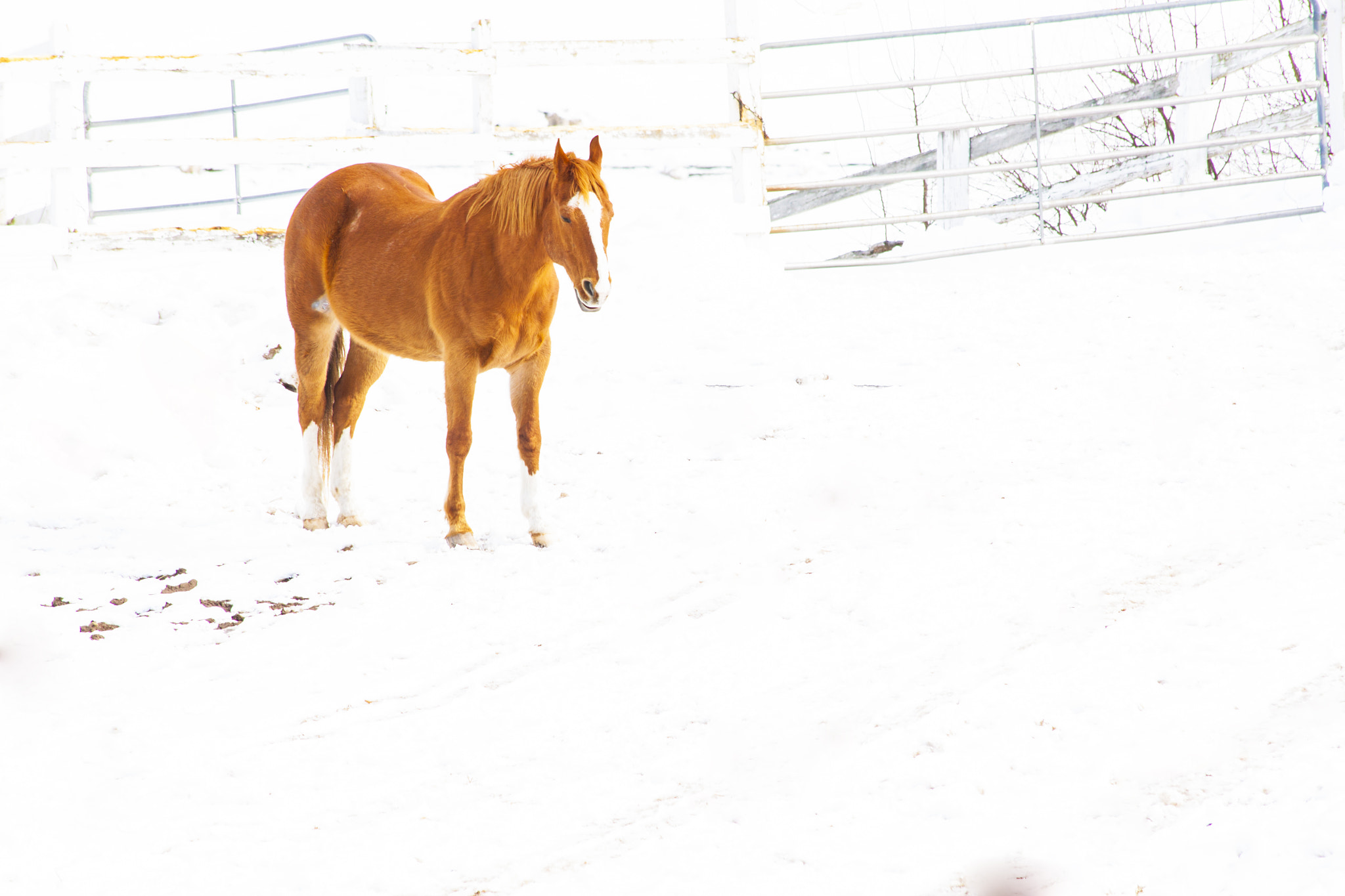 Photograph Horse in a snow land by Samir Mohanty on 500px