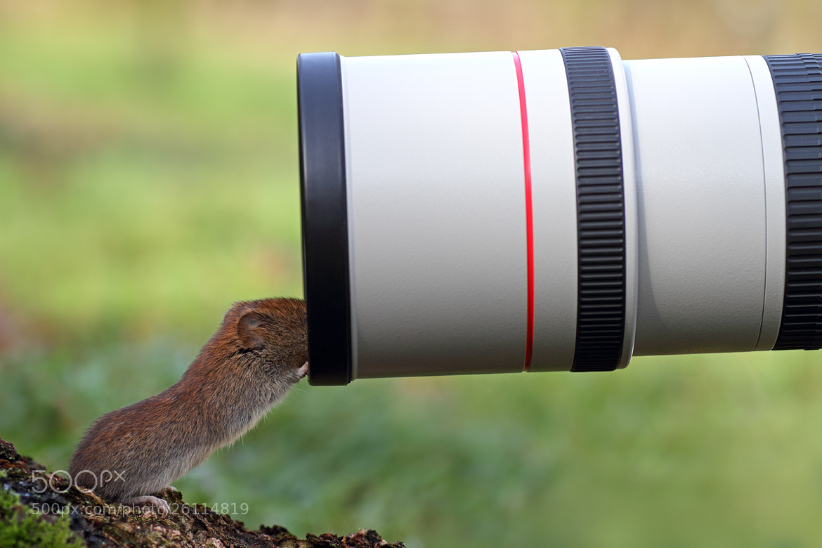 Photograph Too Close! by Simon Roy on 500px