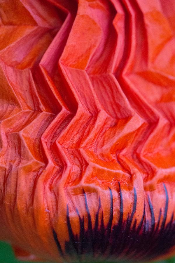 Plis (Folds) de Christine Druesne sur 500px.com