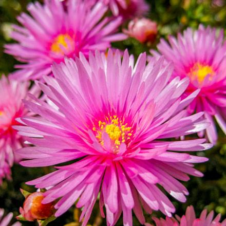 spring flowers, Canon DIGITAL IXUS 80 IS