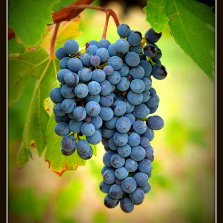 Bunch of grapes, Panasonic DMC-FZ38