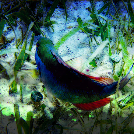 Fish under Water, Canon POWERSHOT D10