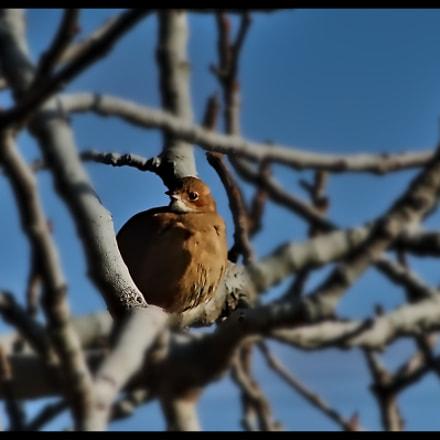 Birdie, Sony DSC-HX1