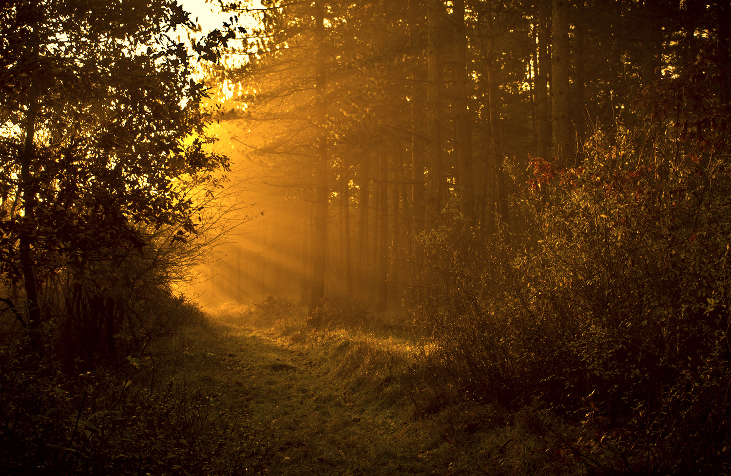 Photograph due to the sun by Andy 58 on 500px