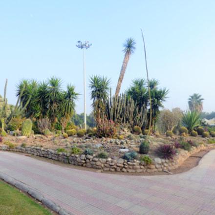 Cactus Garden, Panasonic DMC-FZ70