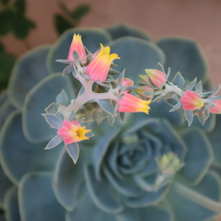 Flowers, Canon EOS M50