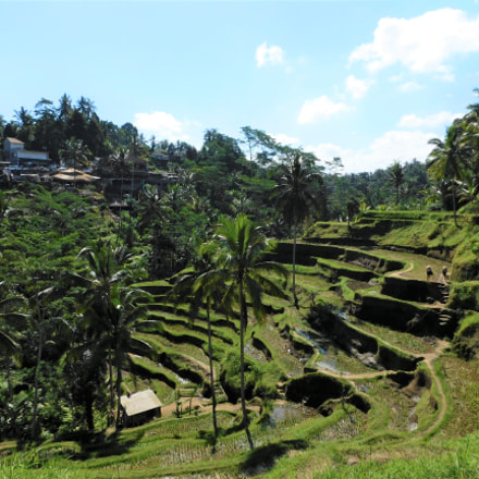 Tegallalang Rice Terraces, Nikon COOLPIX L840