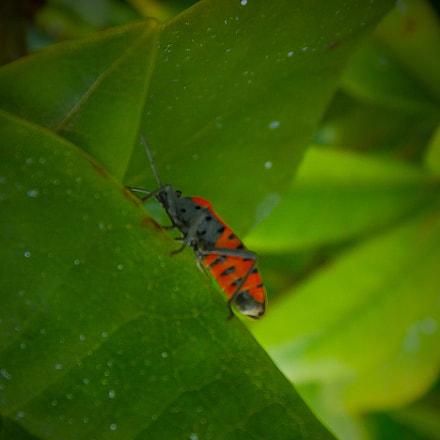 ladybug....., Fujifilm FinePix F900EXR