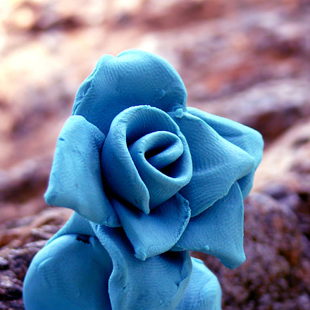 Blue clay flower, Panasonic DMC-FZ50