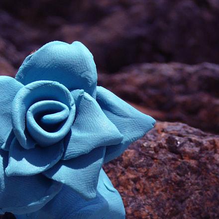 Blue Clay Flower 2, Panasonic DMC-FZ50