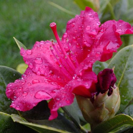 Fleur, Fujifilm FinePix HS30EXR