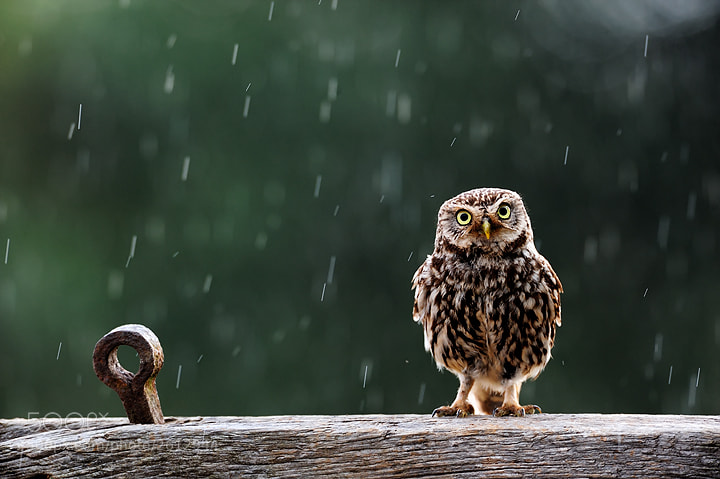 Photograph Singing in the rain. by Craig Churchill on 500px