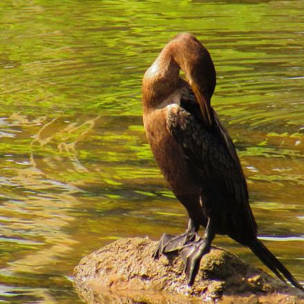 Bird on Rock, Canon POWERSHOT SX420 IS
