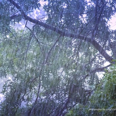 """"""" Midday rain  """", Fujifilm FinePix S9900W S9950W"""