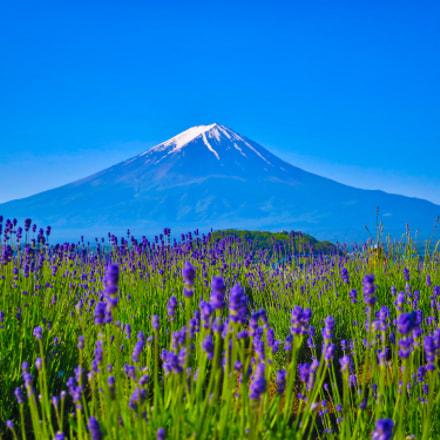 Lavender and Mt. Fuji, Canon POWERSHOT S120