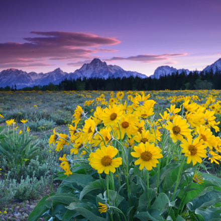 Spring Morning at Tetons, Nikon D800E, AF-S Nikkor 16-35mm f/4G ED VR