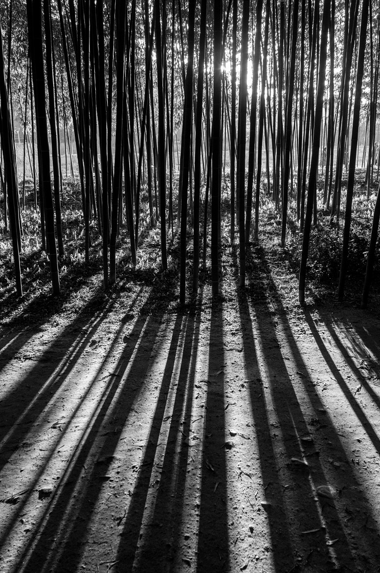 Photograph Bamboo by  Yeom on 500px