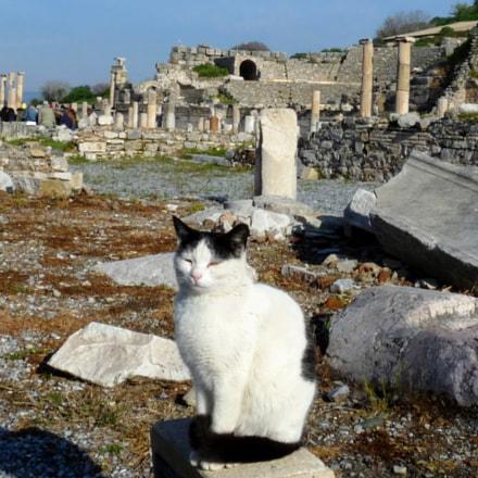Holy Cat of Ephesos, Panasonic DMC-FZ28
