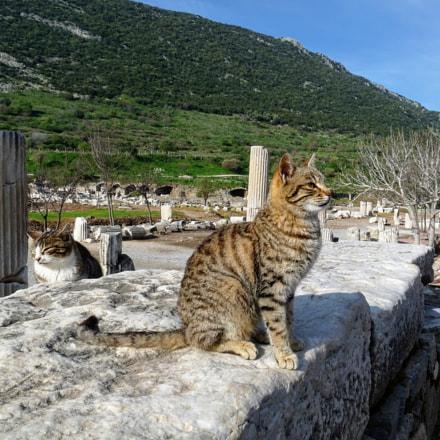 Guardian Cats of Ephesos, Panasonic DMC-FZ28