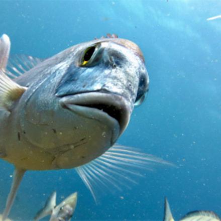Underwater, Canon POWERSHOT SX260 HS