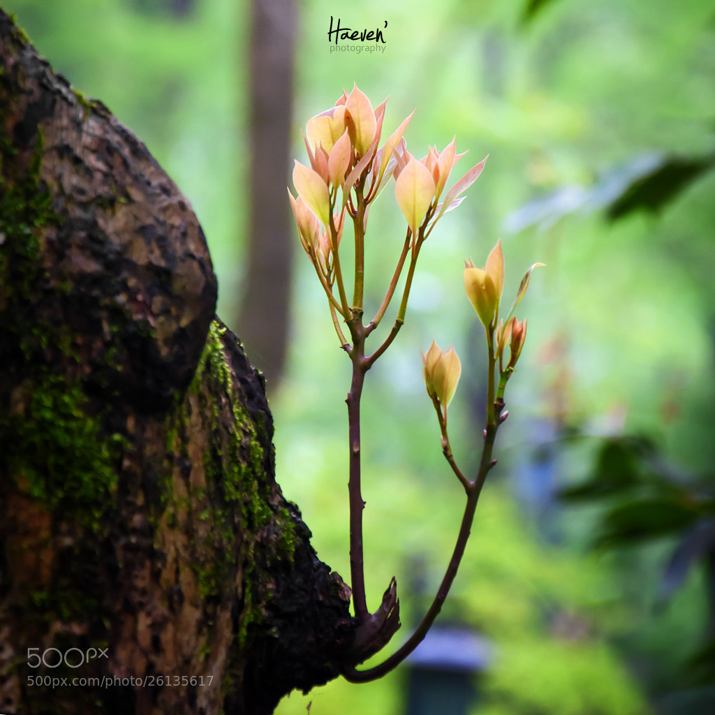 Photograph Green leaf by HAEVEN .Z on 500px