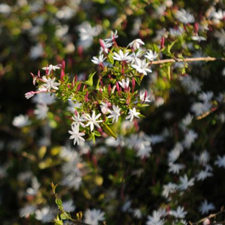 Spring bloom, Nikon D90, Sigma 70-200mm F2.8 EX APO DG Macro HSM II
