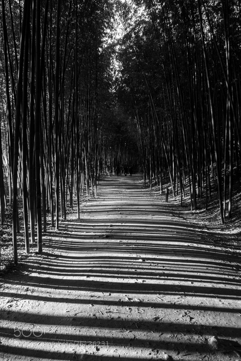 Photograph Bamboo & light by  Yeom on 500px