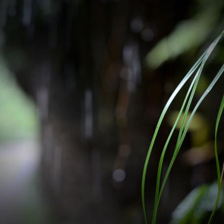 淅沥, Nikon D7000, AF-S Nikkor 50mm f/1.4G