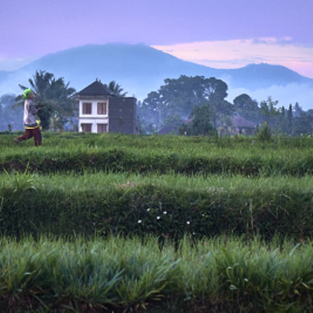 country life, Fujifilm X20