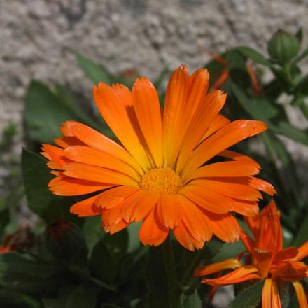 Flores 02, Canon POWERSHOT G1
