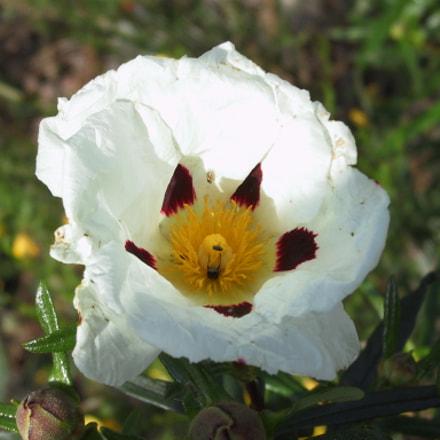 Flores 06, Canon POWERSHOT G1