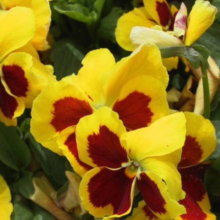 Flores 11, Canon POWERSHOT G1