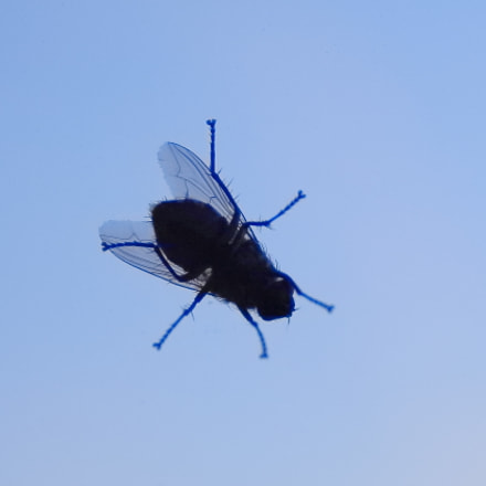 The fly, Canon EOS 700D, Canon EF-S 17-55mm f/2.8 IS USM