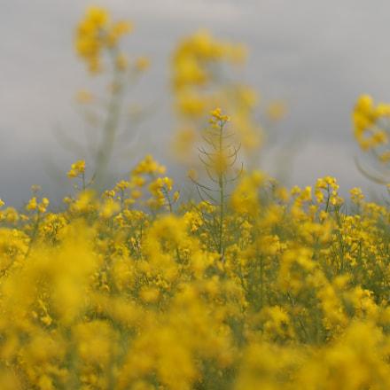 Naturpur, Canon EOS 700D, Canon EF-S 60mm f/2.8 Macro USM