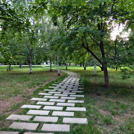 The path among the, Panasonic DMC-TZ60