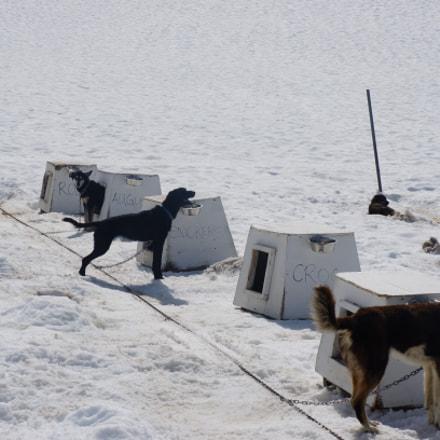 AK-Sled dogs, Sony NEX-5R, Sony E 18-55mm F3.5-5.6 OSS