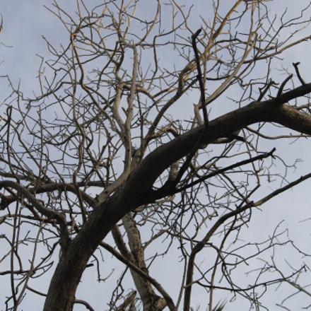 Creepy tree, Canon EOS 1100D, Canon EF-S 55-250mm f/4-5.6 IS