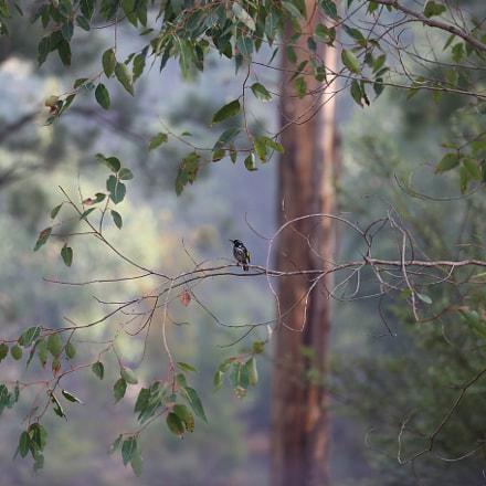 A bird in the, Canon EOS 6D, Canon EF 70-200mm f/2.8L IS II USM