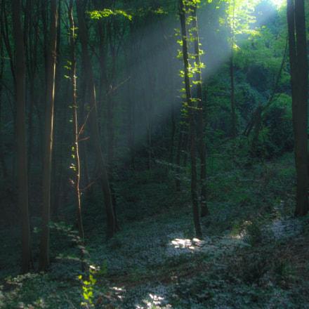 morning in forest..., Sony DSC-T70