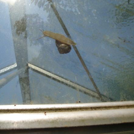 Imprisoned snail, Sony DSC-L1