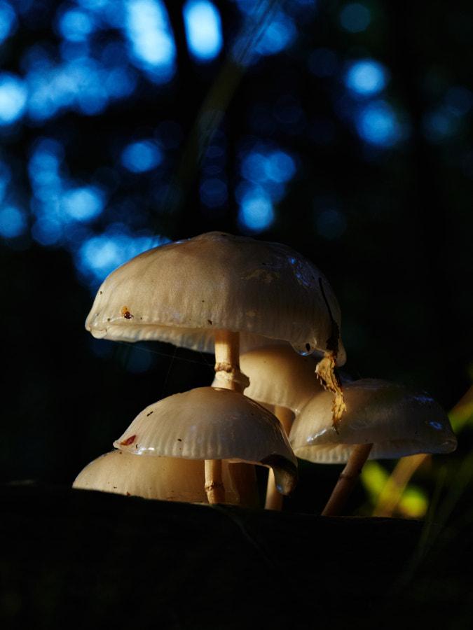 Funghi in De Kaapse bossen