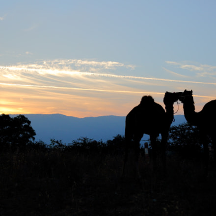 Camels, Canon EOS 5D MARK III, Canon EF 24-70mm f/2.8L II USM